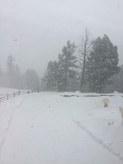 Spring Storm, Divide CO, photo by Terry Odell