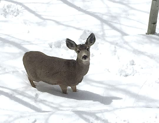 Deer in the snow, photo by Terry Odell