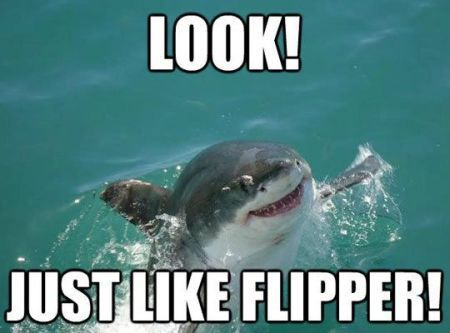 photo 20-just-like-flipper-shark-funny_zpstjkpzwkx.jpg
