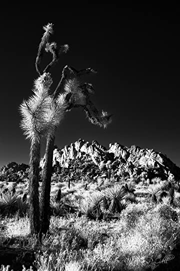 Joshua Tree, photo courtesy of Jason Odell