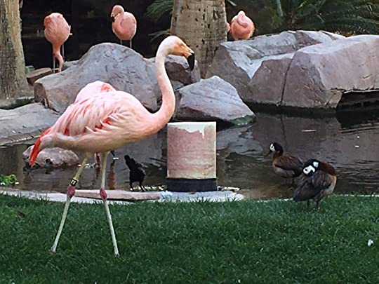 There really are flamingos at the Flamingo. They are all pathological gamblers.