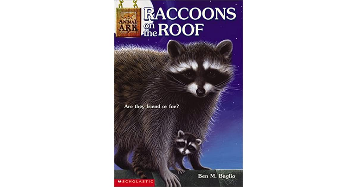 How To Keep Raccoons The Roof 28 Images How To