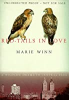Red Tails In Love: A Wildlife Drama In Central Park