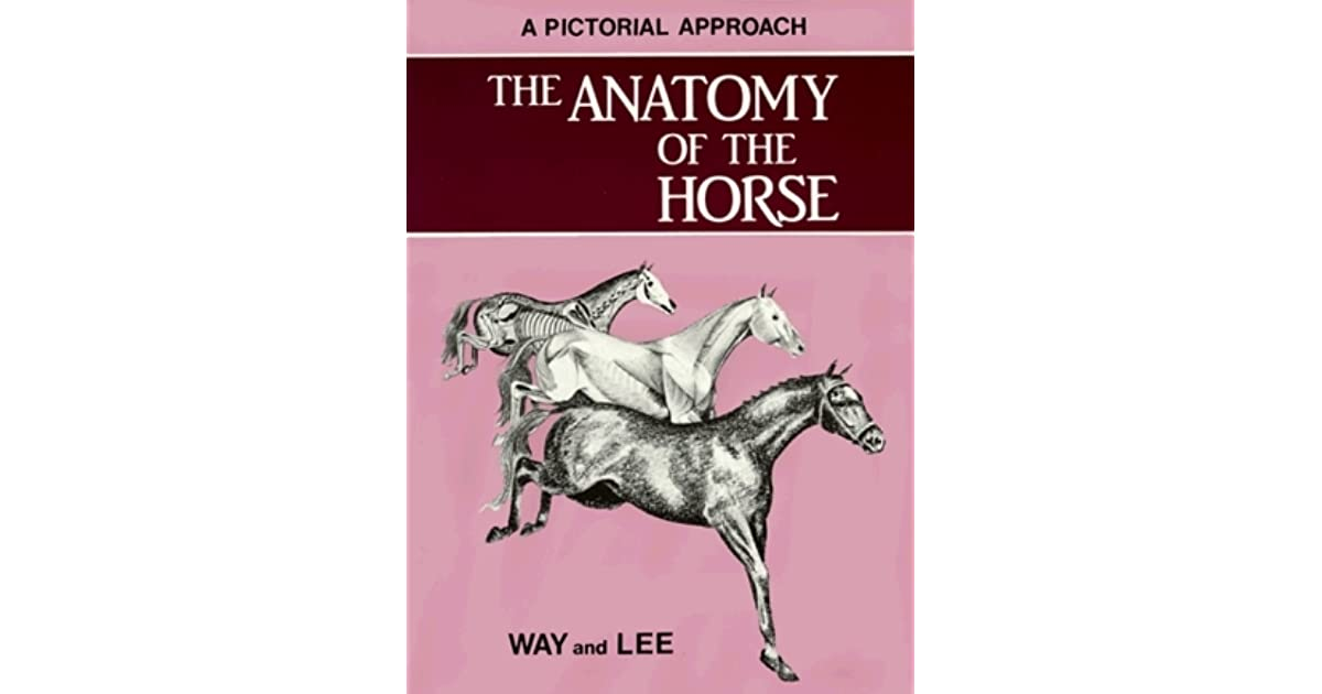 The Anatomy Of The Horse A Pictorial Approach By Donald Lee