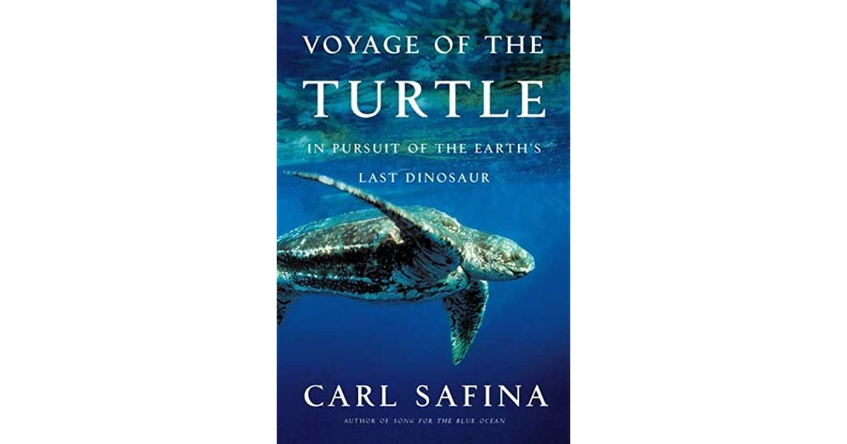 the earth on turtles back summary Many of the ancients believed that the earth was a flat disk or plane, sitting on the back of a giant turtle who floated in a giant pool of water.