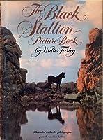 The Black Stallion Picture Book