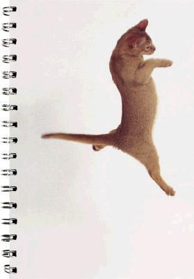 Solo cat Doja Cat