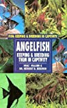 Angelfish (Oop)