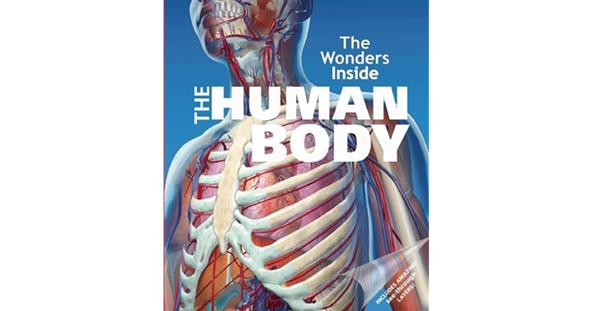 The Wonders Inside The Human Body By Jan Stradling