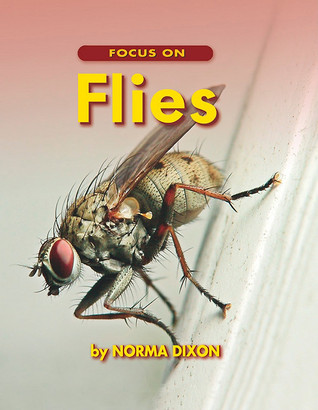 Focus on Flies