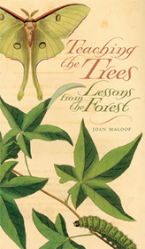 Teaching the Trees: Lessons from the Forest