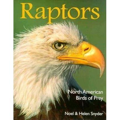 Raptors North American Birds Of Prey By Helen Snyder