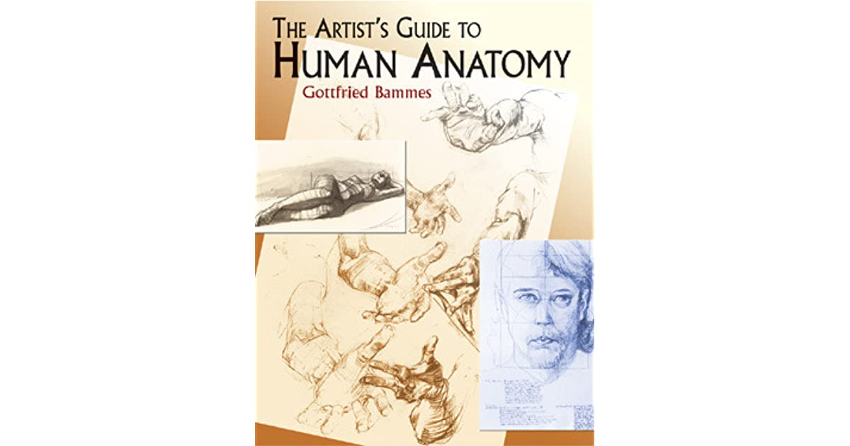 The artists guide to human anatomy by gottfried bammes fandeluxe Choice Image