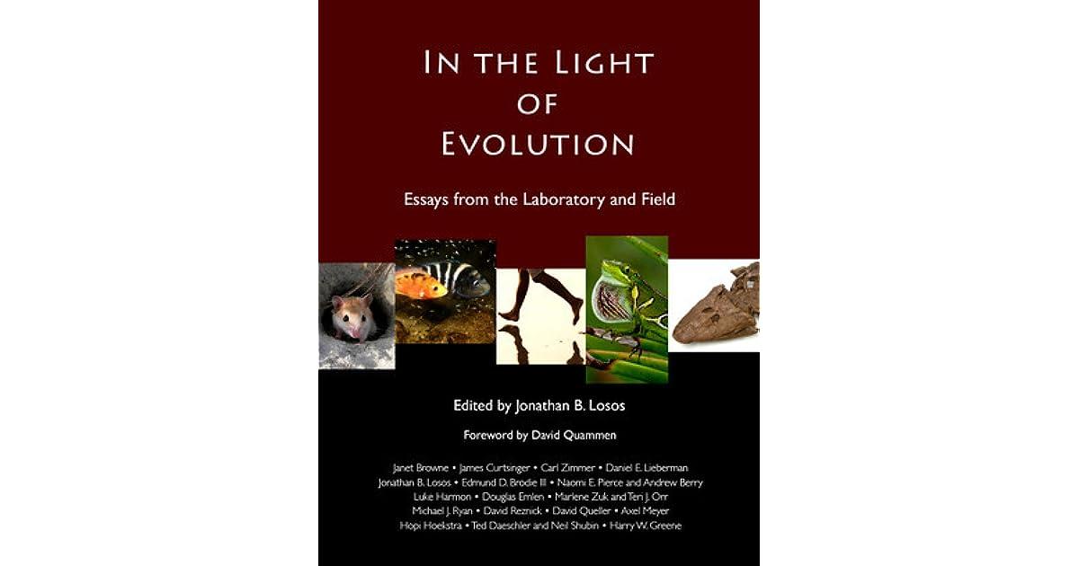 the light essay