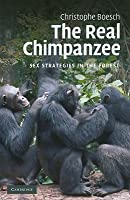 Real Chimpanzee