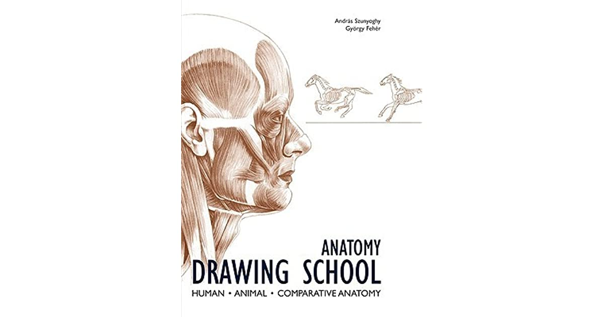 Anatomy Drawing School Human Animal Comparative Anatomy By Andrs