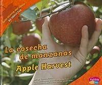 La cosecha de manzanas/ Apple Harvest (Pebble Plus Bilingual) (Spanish Edition)