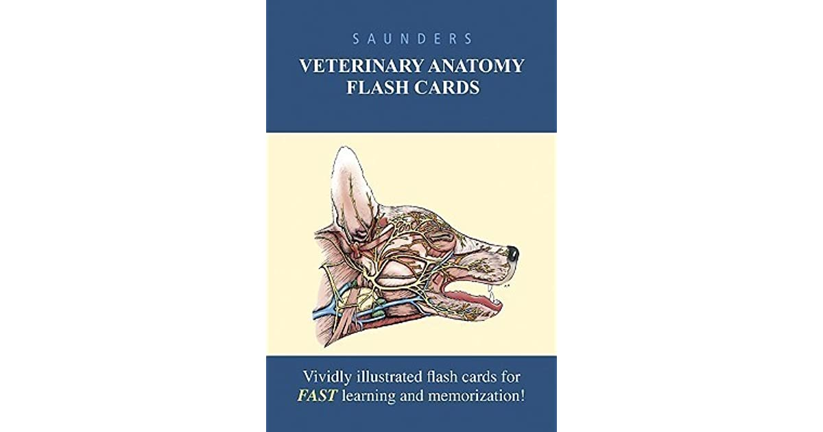 FLASH CARDS: Saunders Veterinary Anatomy Flash Cards by NOT A BOOK