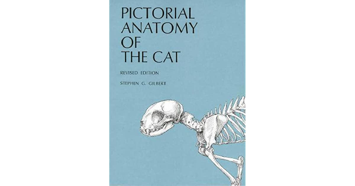 Pictorial Anatomy of the Cat by Stephen G. Gilbert