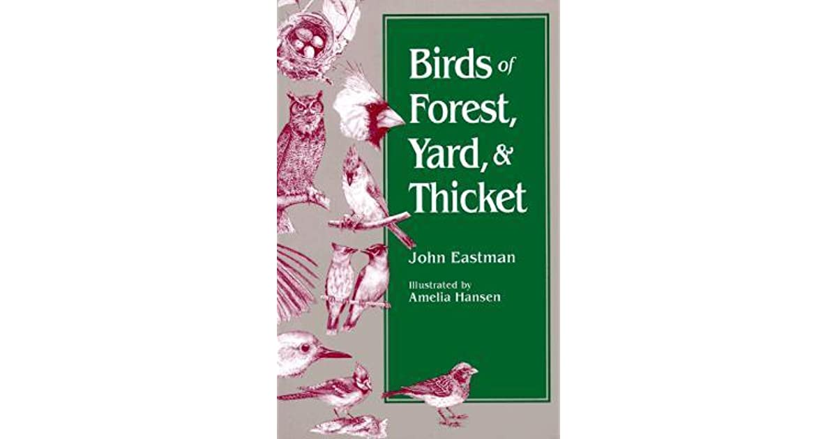 Birds Of Forest Yard Thicket By John Eastman