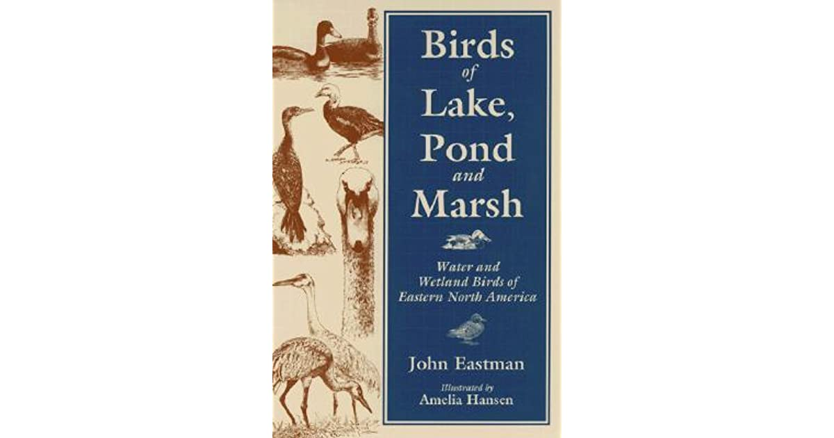 Birds Of Lake Pond Marsh Water And Wetland Birds Of Eastern North