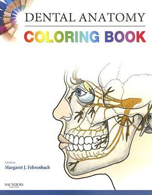Dental Anatomy Coloring Book 2nd Edition Answers - Worksheet ...