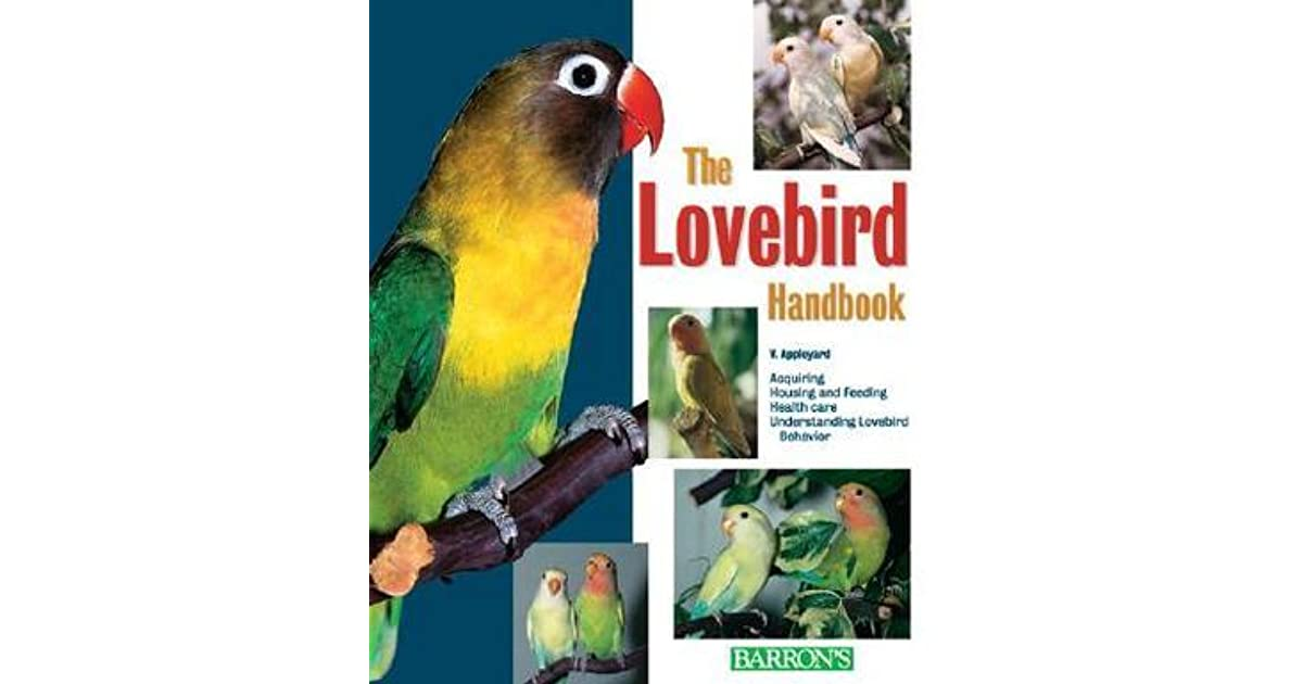 Lea lovebird
