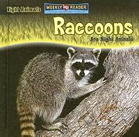 Raccoons Are Night Animals