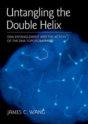 Untangling the Double Helix: DNA Entanglement and the Action of the DNA Topoisomerases