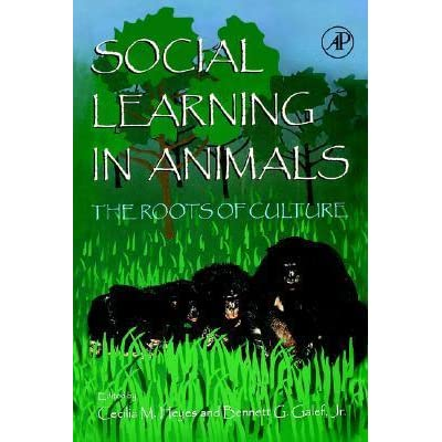 Social Learning In Animals: The Roots of Culture