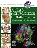 Atlas de Neurosciences Humaines de Netter Atlas de Neurosciences Humaines de Netter Atlas de Neurosciences Humaines de Netter Atlas de Neurosciences Humaines de Netter Atlas de Neurosc: Neuroanatomie - Neurophysiologie Neuroanatomie - Neurophysiologie ...