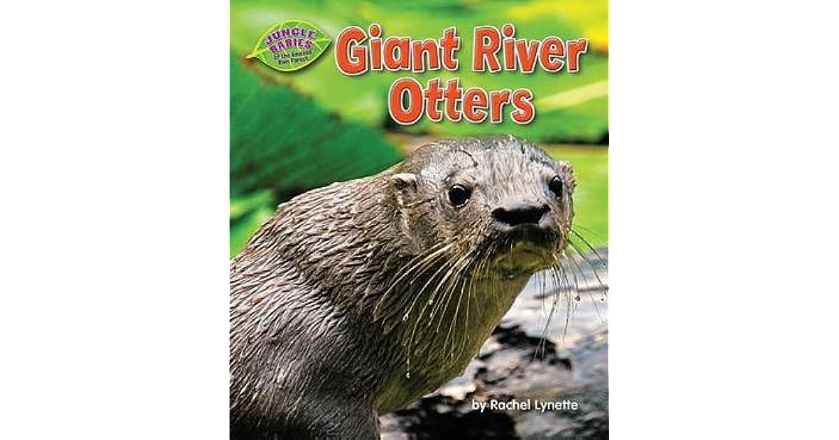 Giant River Otters By Rachel Lynette