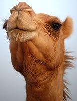 camel's eye