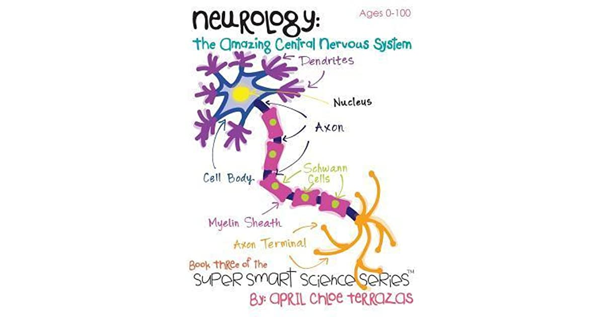 Neurology The Amazing Central Nervous System By April Chloe Terrazas