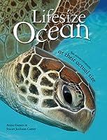 Lifesize: Ocean