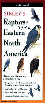 Sibley's Raptors of Eastern North America