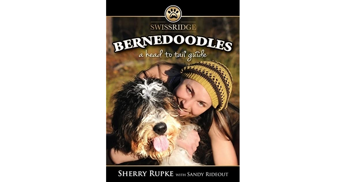 Bernedoodles A Head To Tail Guide By Sherry Rupke