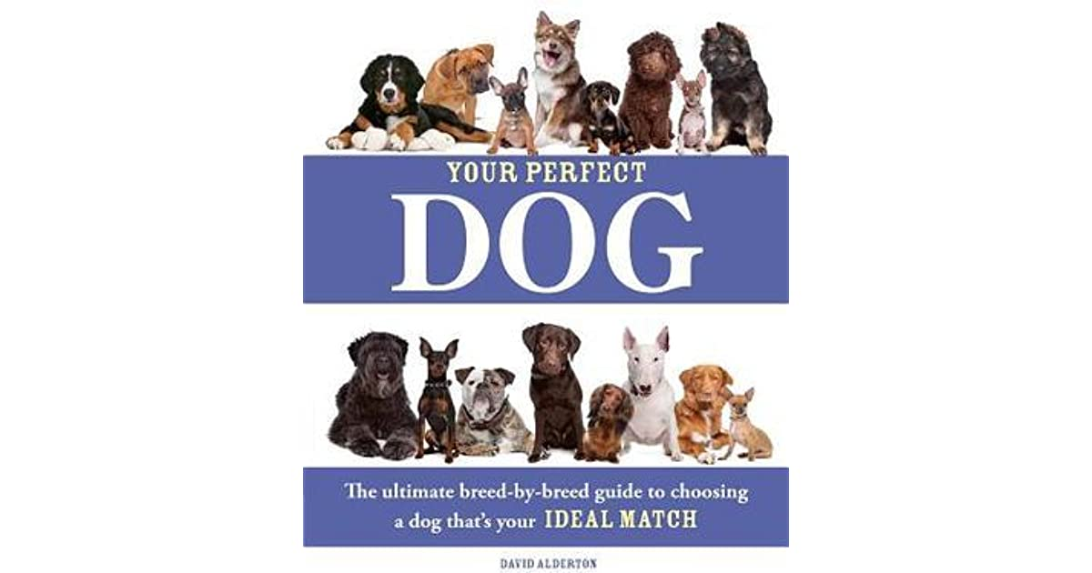 how to choose the perfect dog essay 100% free papers on my hair essays sample topics, paragraph introduction help, research & more class 1-12, high school & college -  how do you know how to choose the perfect dog for you finding the right dog or puppy can be very stressful it is a huge decision to make and not one to rush in to everyone loves a puppy.