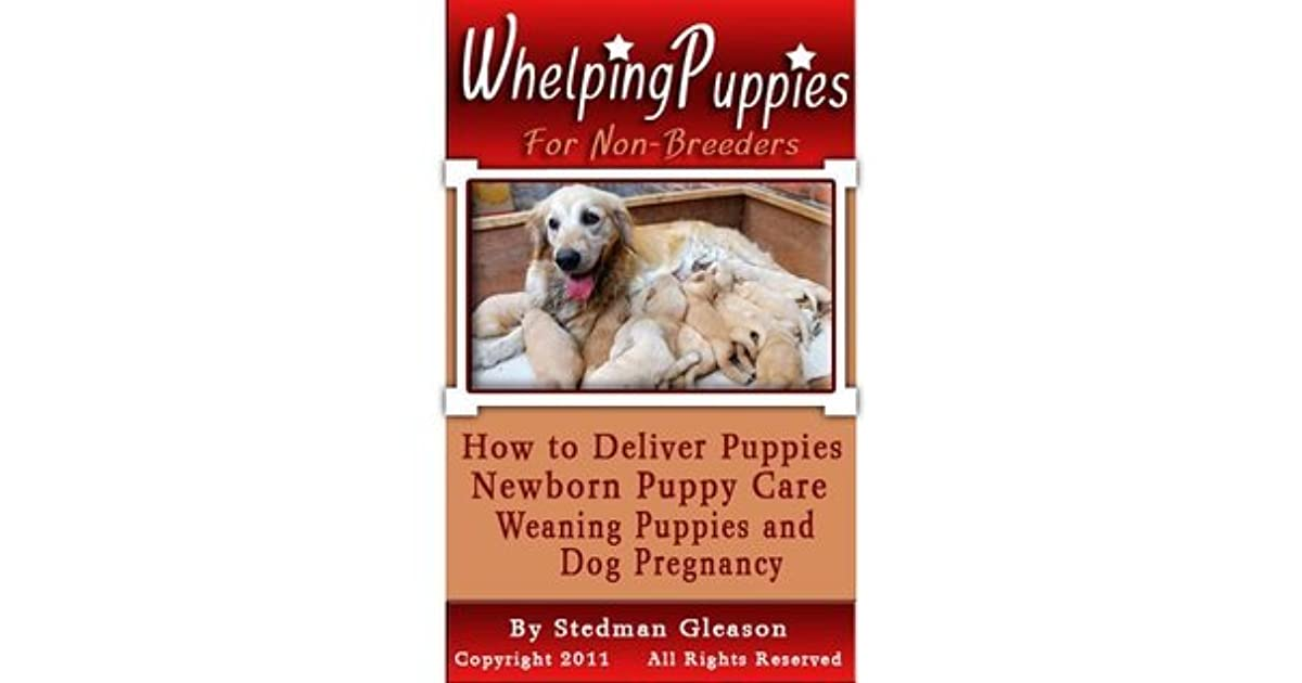 Whelping Puppies For Non Breeders How To Deliver Puppies Newborn
