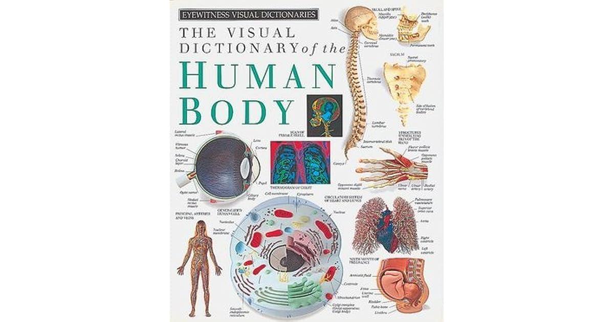 Eyewitness Visual Dictionaries: The Visual Dictionary of the Human ...
