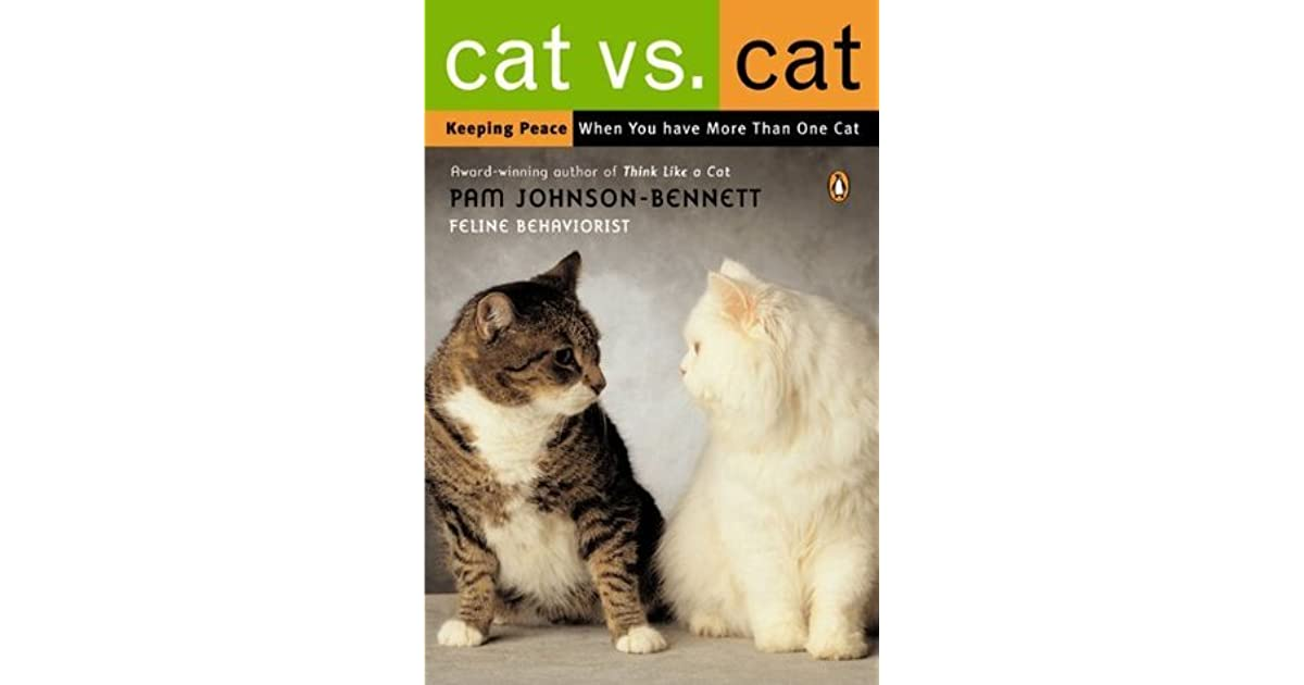 cat vs cat keeping peace when you have more than one cat by pam