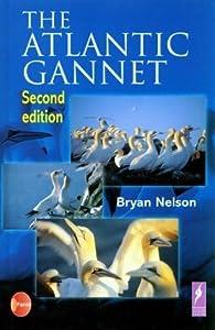 The Atlantic Gannet