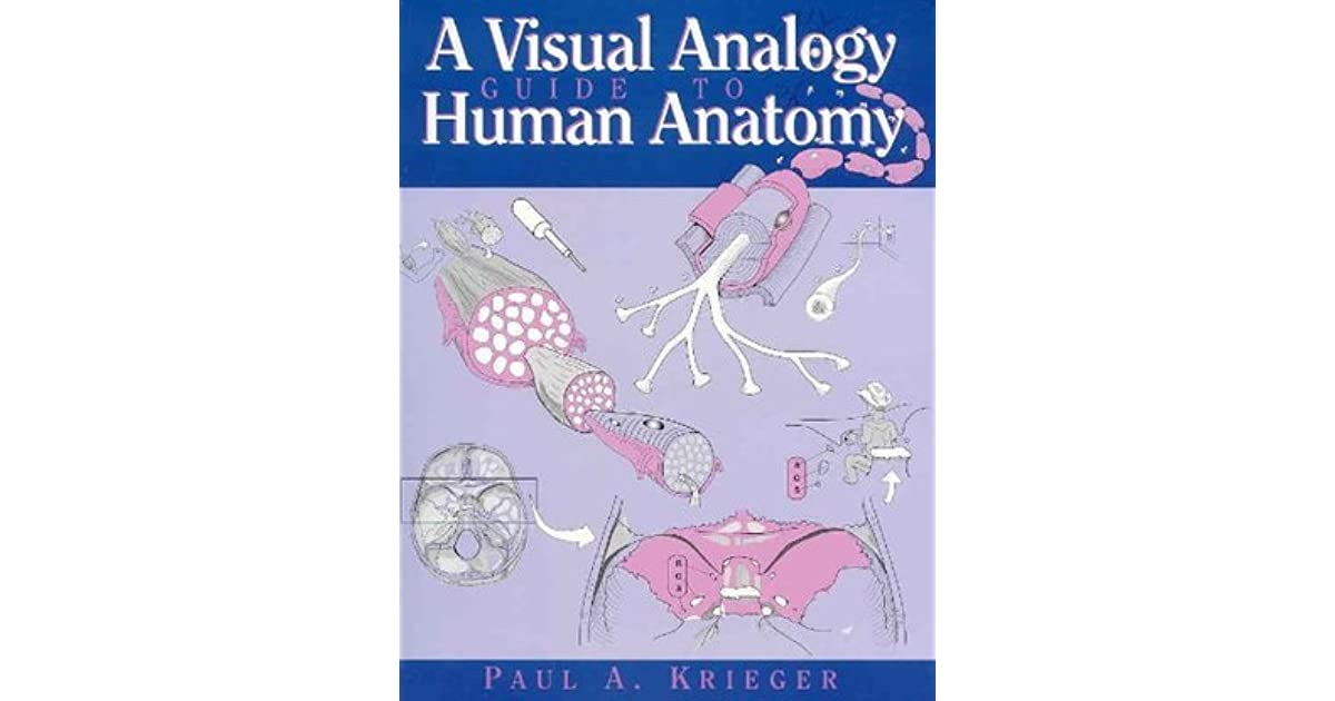 A Visual Analogy Guide To Human Anatomy By Paul A Krieger