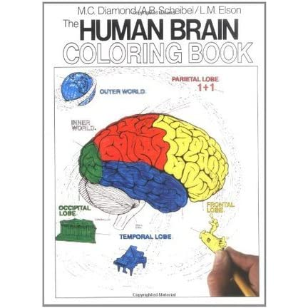 The Human Brain Coloring Book by Marian C. Diamond ...