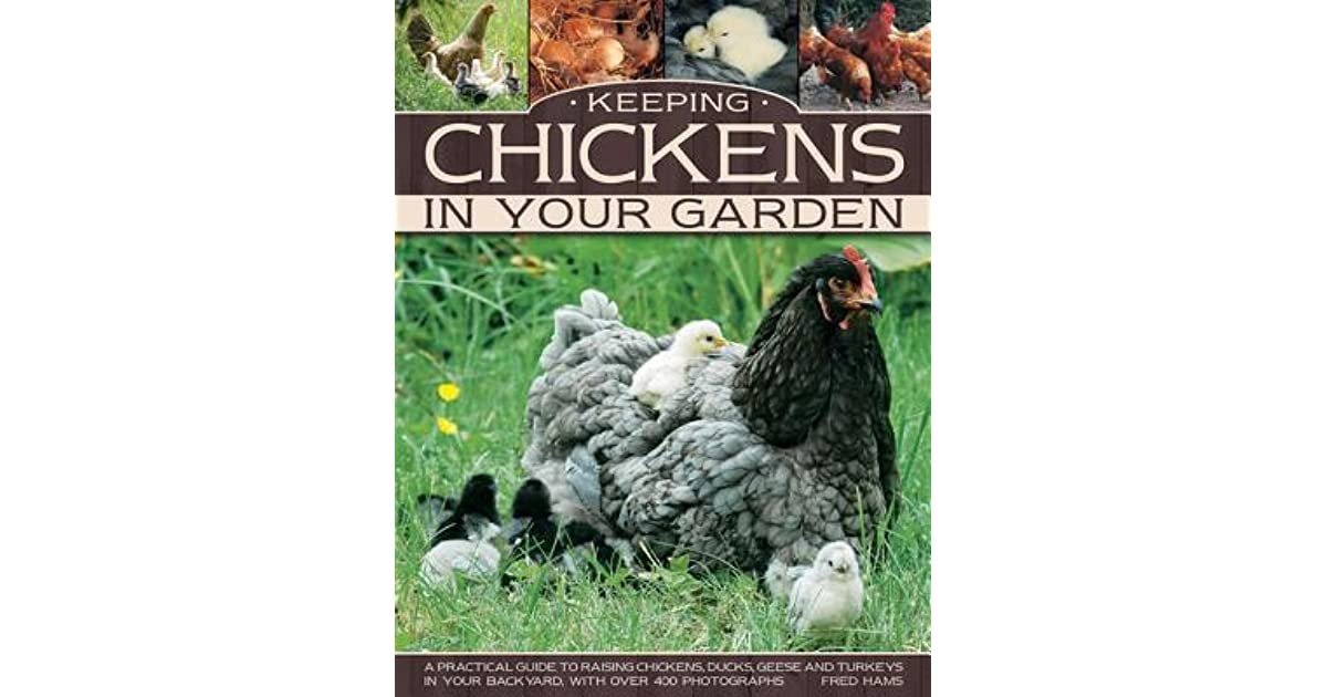 Keeping Chickens in Your Garden: A Practical Guide to ...