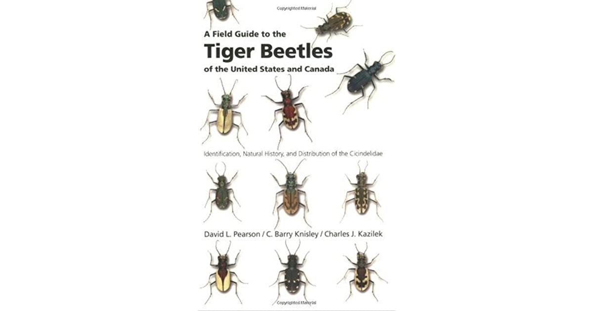 A Field Guide to the Tiger Beetles of the United States and