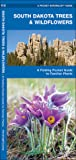 South Dakota Trees & Wildflowers: A Folding Pocket Guide to Familiar Species