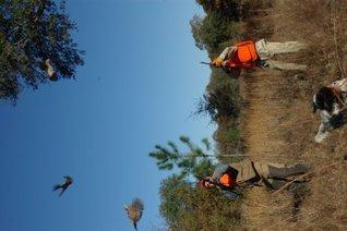Nick Sisley Tests Hunting Shotguns