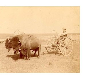 Not Buffalo Bill But Buffalo Jones: Three short, non-fiction stories of the West