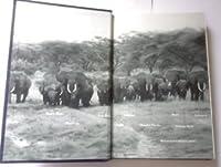 Among the Elephants